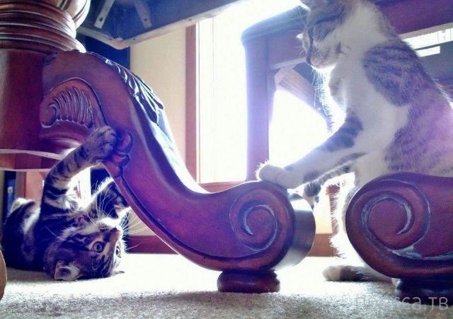 Милые и забавные животные, часть 37 (45 фото)