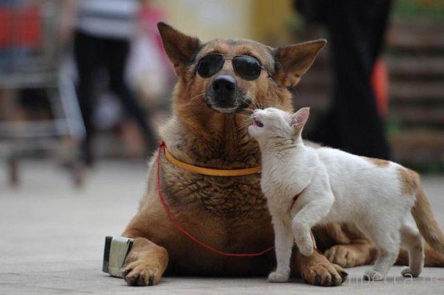 Милые и забавные животные, часть 38 (40 фото)