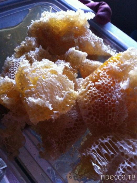 Пчелы поселились на чердаке (12 фото)
