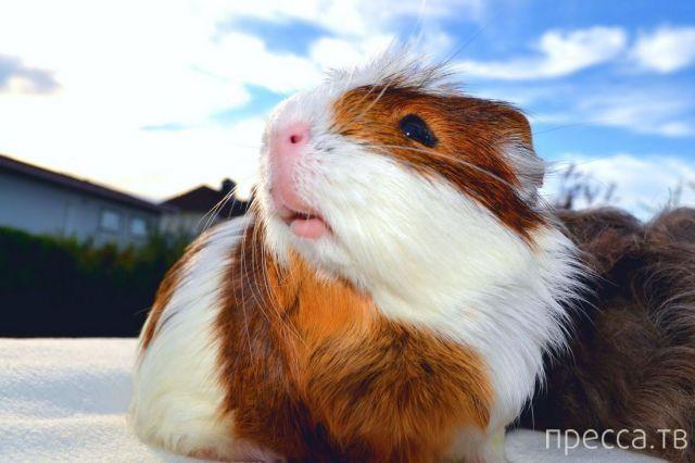Милые и забавные животные, часть 39 (44 фото)