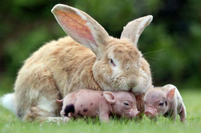 Милые и забавные животные, часть 40 (45 фото)