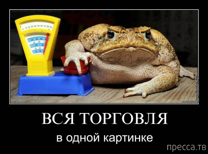 находить общий прикольные картинки жаба давит словам