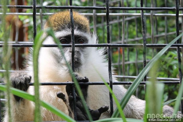 Ялтинский зоопарк в лицах, клювах и мордочках (40 фото)