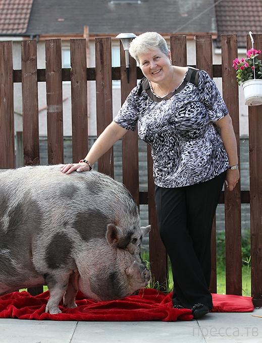 """Кэтрин Дэйвз из Великобритании """"подложили свинью"""" (8 фото)"""