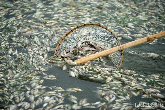 Экологическая катастрофа у берегов Китая (9 фото)