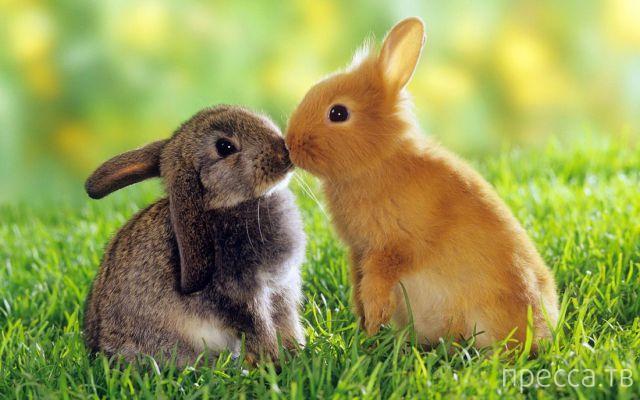 Милые и забавные животные, часть 44 (40 фото)