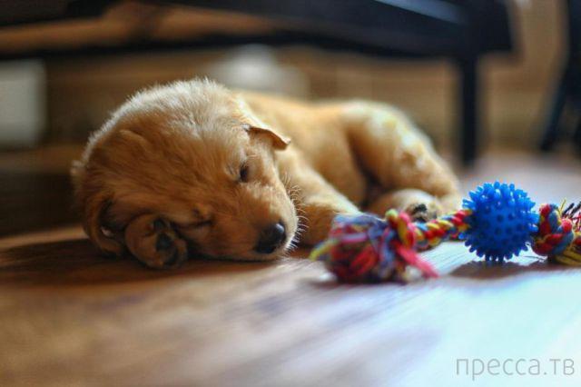 Милые и забавные животные, часть 45 (43 фото)