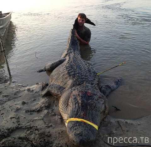В штате Миссисипи поймали самого тяжелого и длинного аллигатора (2 фото + видео)