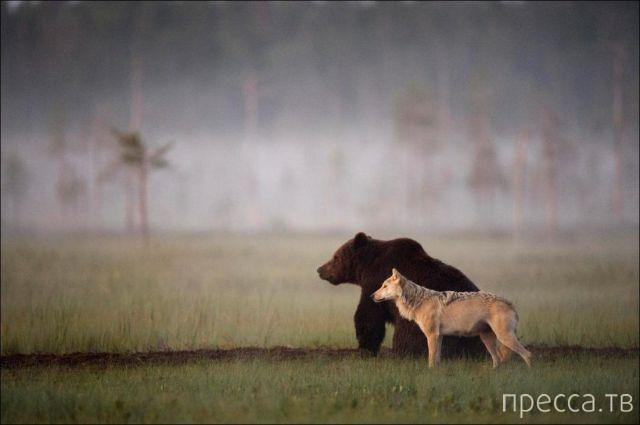 Милые и забавные животные, часть 46 (40 фото)