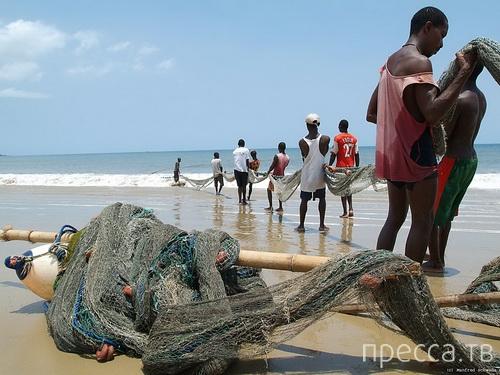 К берегам Ганы выбросило непонятное морское животное... (3 фото)