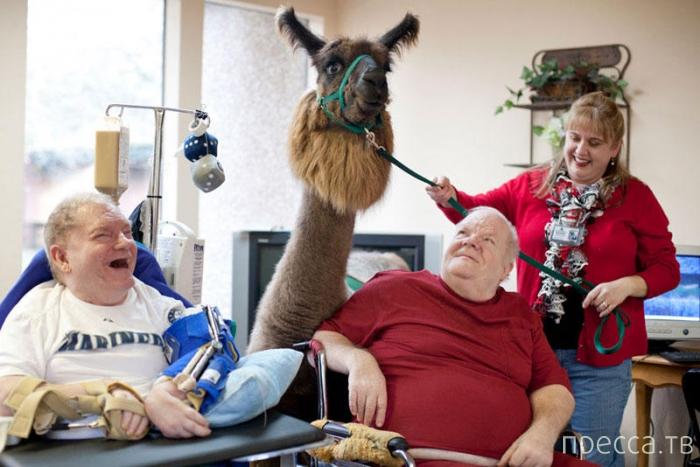Необычная терапия для больных и пожилых людей (5 фото)