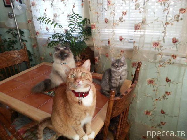 Милые и забавные животные, часть 49 (40 фото)