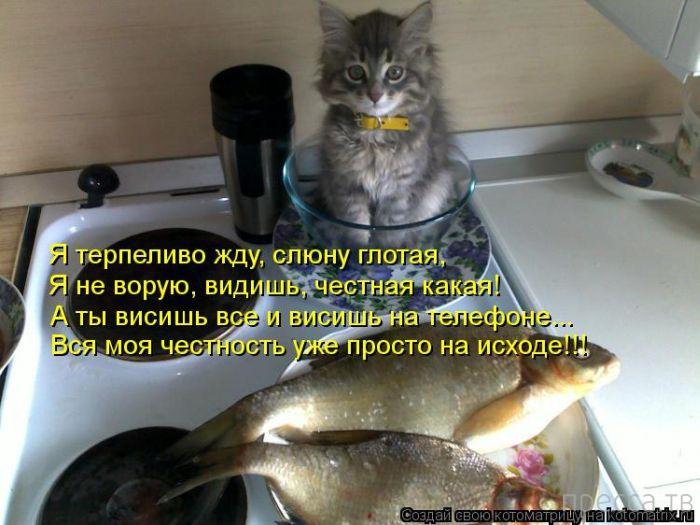 Прикольные котоматрицы, часть 1 (40 фото)