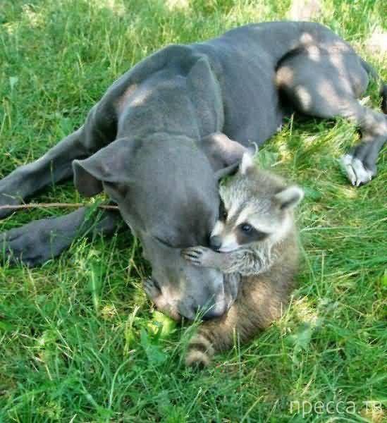 Милые и забавные животные, часть 52 (44 фото)