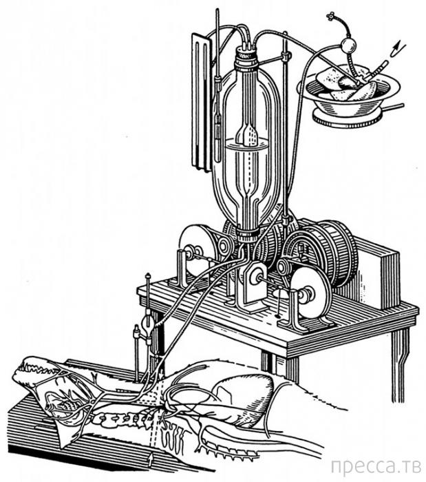Топ 9: Современные ученые, ставящие самые необычные эксперименты (11 фото)