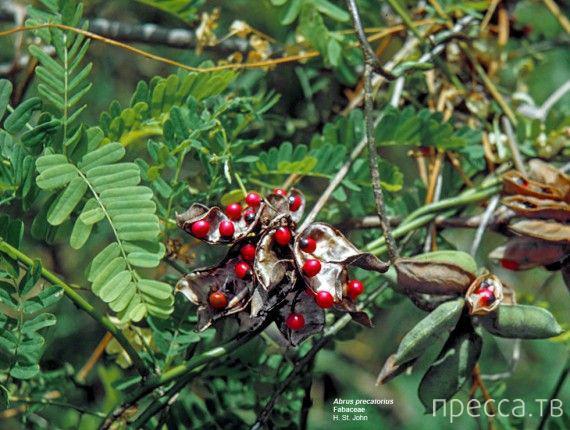 Топ 10: Самые опасные растения-убийцы (11 фото)