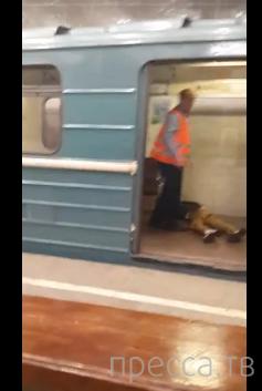 Суицид в московском метро, станция Орехово... Жесть!!!!!!!