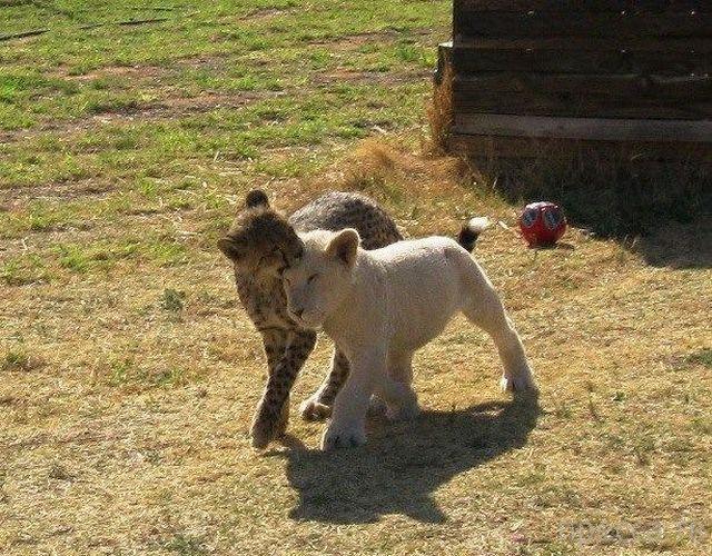 Милые и забавные животные, часть 55 (37 фото)
