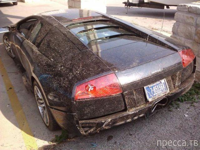 История одного Lamborghini (9 фото)