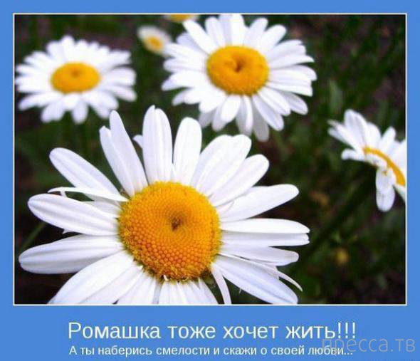 Позитивные мотиваторы (31 фото)