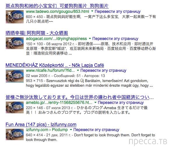 Топ 10: Способы отличить обман в интернете от просьбы о помощи (7 фото)