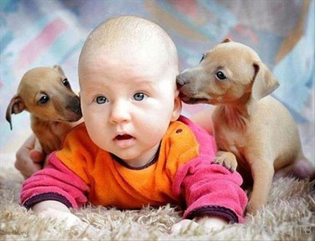 Милые и забавные животные, часть 57 (20 фото)