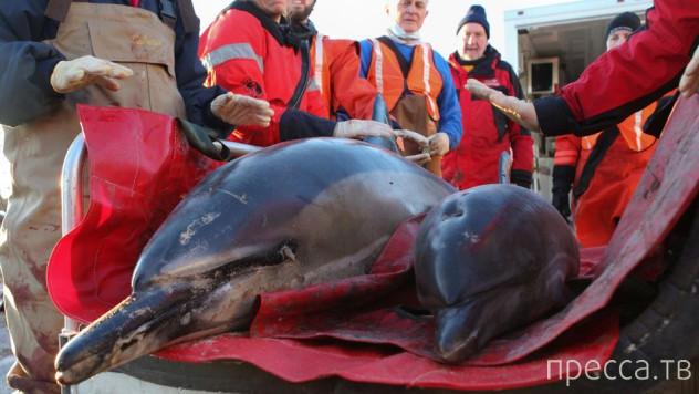 Топ 10: Интересные факты о дельфинах (11 фото)