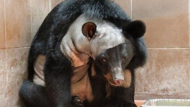Топ 9: Факты о медведях, которые надо знать (9 фото)
