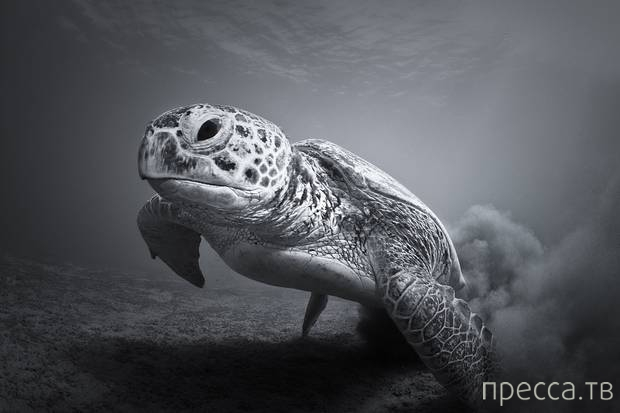"""Лучшие фотографии с фотоконкурса """"ZSL Animal Photography Prize-2013"""" (7 фото)"""