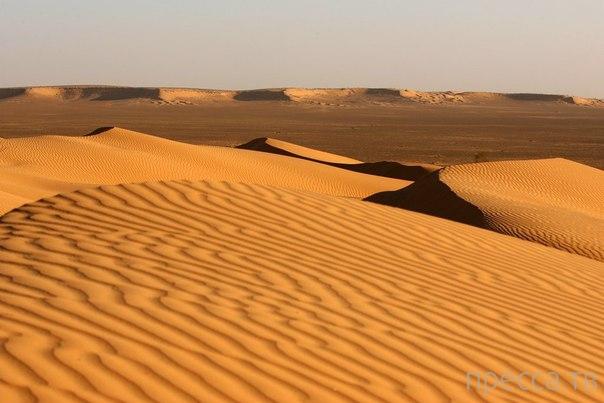 Большой Восточный Эрг - пустыня в Северной Сахаре (10 фото)
