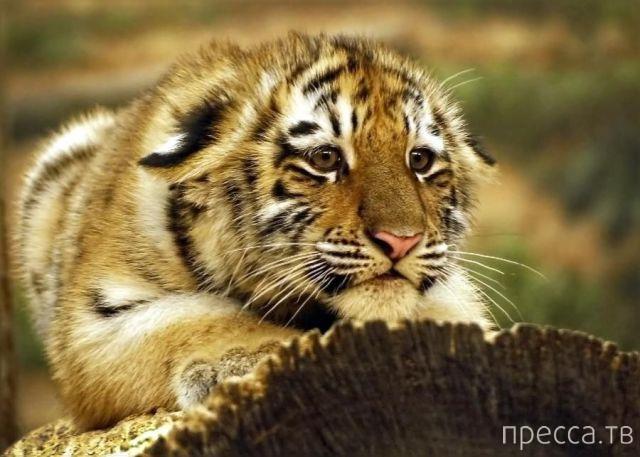 Милые и забавные животные, часть 60 (39 фото)