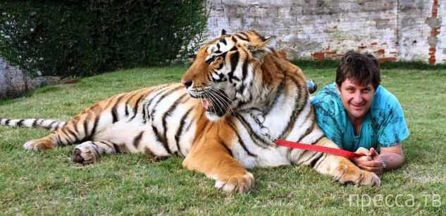 В бразильской семье живут семь тигров (10 фото)