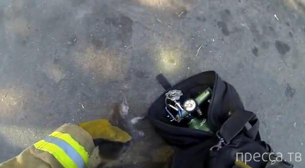 Пожарный спасает котенка... (видео)