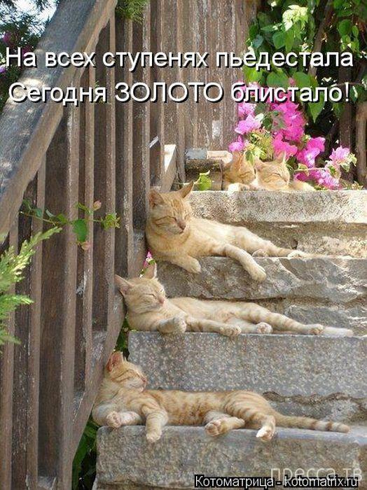 Прикольные котоматрицы, часть 3 (50 фото)