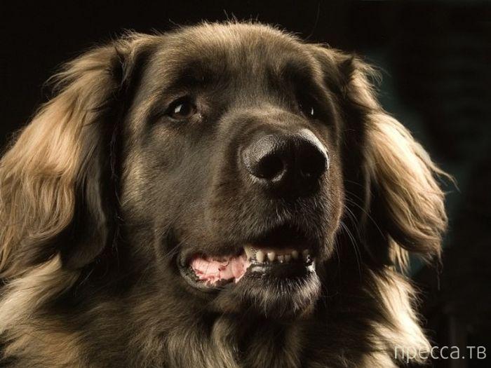 Топ 5: Самые необычные способности собак (5 фото)