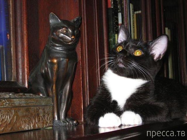 Милые и забавные животные, часть 63 (46 фото)