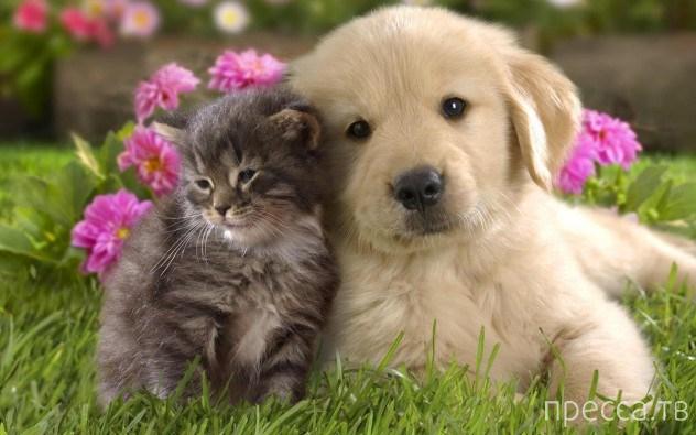 Интересные факты о домашних животных (10 фото)