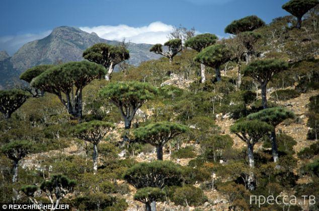 Остров Сокотра - настоящий «затерянный мир» (11 фото)