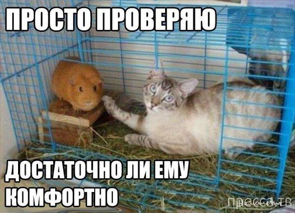 Прикольные картинки с животными (25 фото)
