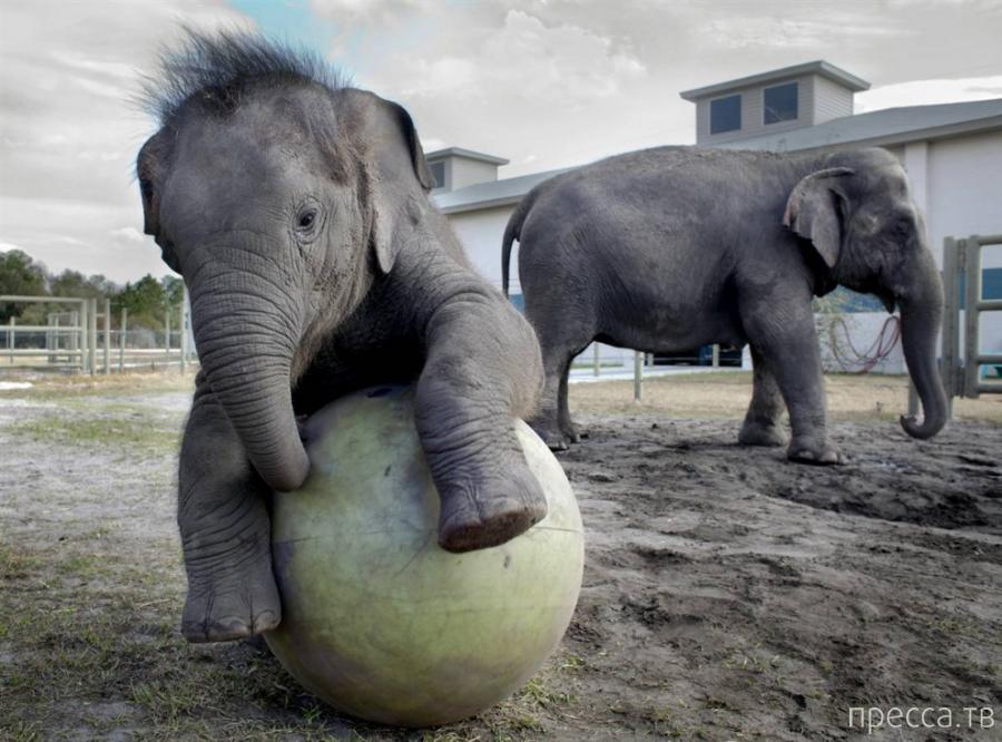 Милые и забавные животные, часть 42 (29 фото)