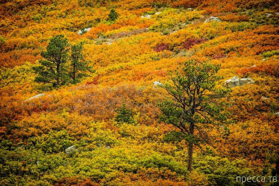 Золотые осенние краски в работах фотографа David Kingham (24 фото)