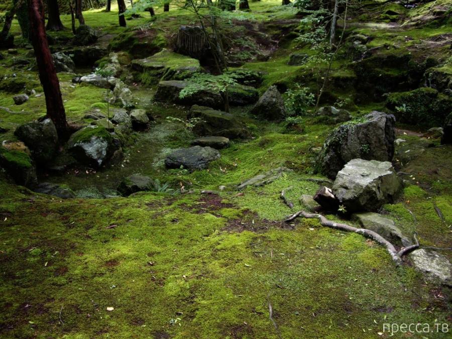Сад мхов Saiho-ji. Япония (26 фото)