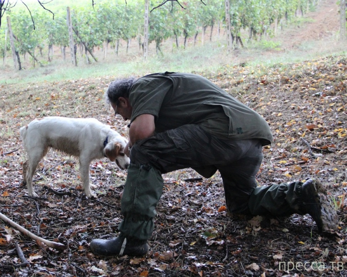 Уикенд по-итальянски или в поисках белого трюфеля (13 фото)