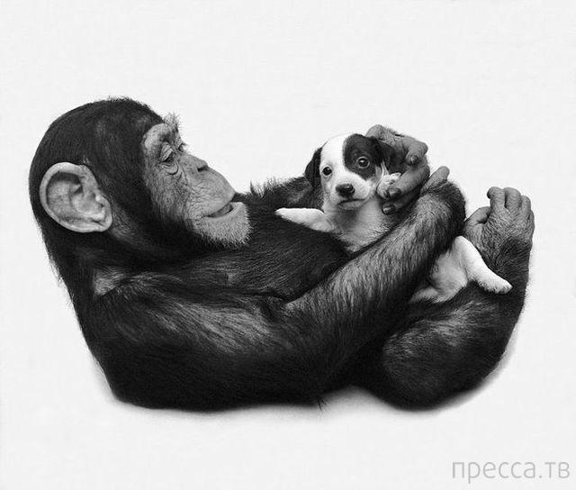 Милые и забавные животные, часть 64 (50 фото)