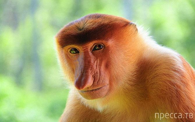 Топ 12: Самые противные животные в мире (12 фото)