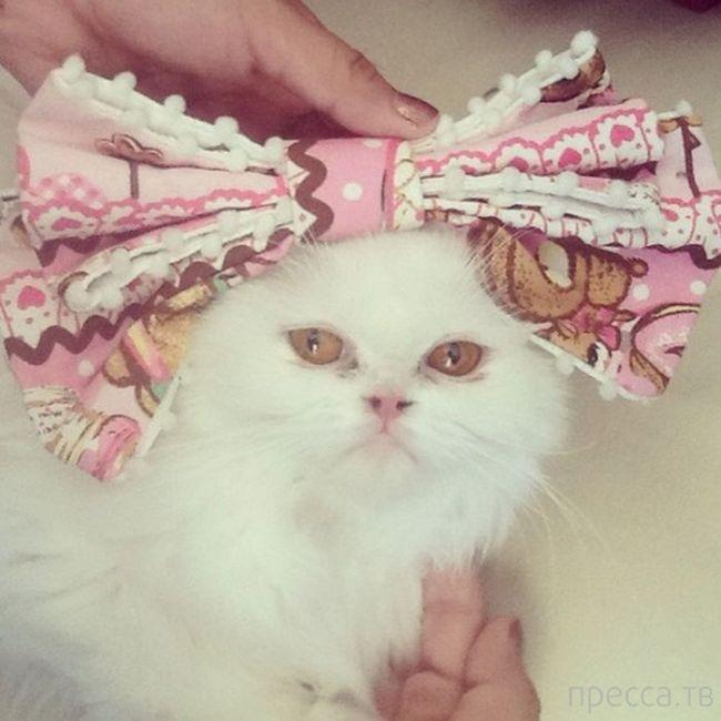 Необычные фотографии - Животные в одежде (41 фото)