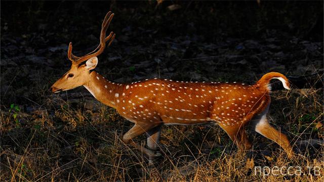 Топ 10: Самые редкие животные, которым грозит полное исчезновение (10 фото)
