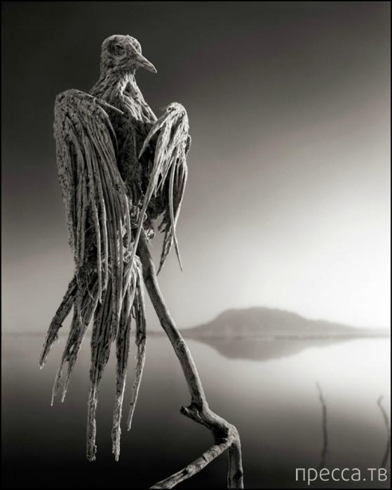Озеро, превращающее животных в камень (6 фото)