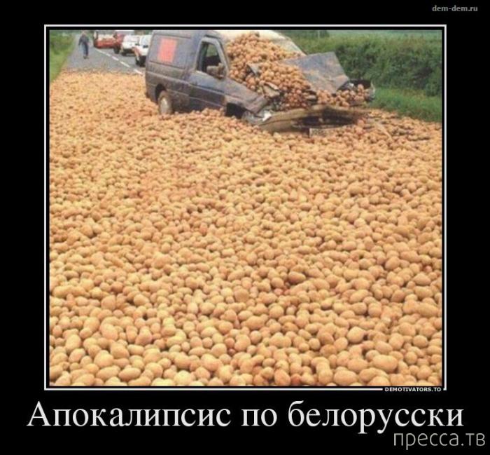 Рисунки, прикольные картинки про белоруссию