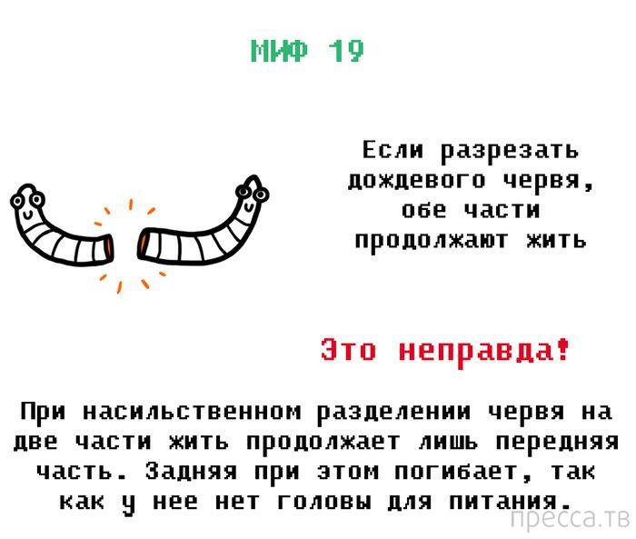 Разрушаем неправдивые мифы  (11 фото)